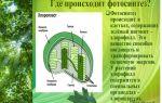 Тилакоиды – зеленые фабрики фотосинтеза