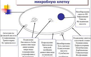 Взаимодействие антибиотиков и бактерий