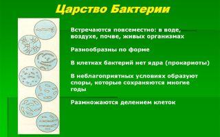 Особенности представителей царства бактерий