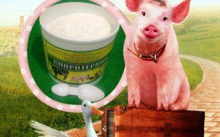 Действие и преимущество препаратов с бактериями для свиней и других домашних животных