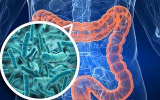 Почему детскому кишечнику так нужны живые бактерии?
