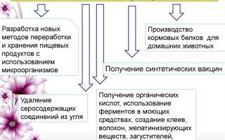 Применение сухих бактерий в разных сферах