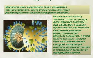 Что провоцирует грипп: вирусы или бактерии?