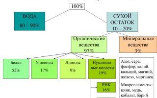 Особенности химического состава клеток бактерий