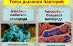 Зачем нужны в анаэробных септиках бактерии