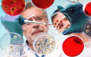 На страже здоровья людей и природы, или как ученые исследуют бактерии?