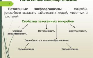 Какую опасность представляют патогенные и условно патогенные микроорганизмы для человека