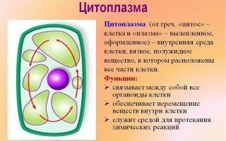 Состав клетки бактерии и функции цитоплазмы