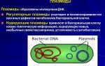 Особенности днк в клетках бактерий