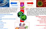 Опасное соседство – заболевания, вызванные вирусами и бактериями