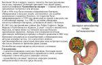 Коварная бактерия хеликобактер пилори, основные симптомы и лечение хеликобактериоза