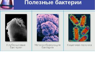 Какие полезные, а какие неполезные бактерии для человека