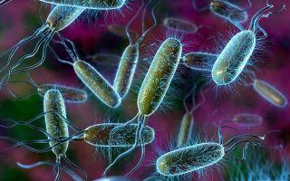 Кишечная палочка и другие бактерии данной группы как жители планеты «человек»
