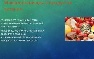 Бактерии, живущие в пищевых продуктах