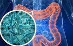 Почему кишечник человека не может функционировать без бактерий