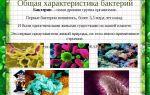 «все могут короли…», или многообразие бактериальных свойств