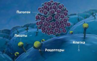 Лизаты бактерий: как враги превращаются в друзей