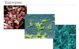 Кто правит миром – мы или бактерии?