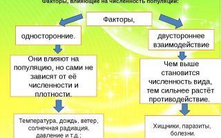 Основные виды деления бактерий и факторы ограничения роста популяции