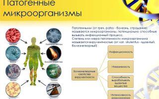 Опасная микрофлора рядом: множество способов размножения патогенных микроорганизмов