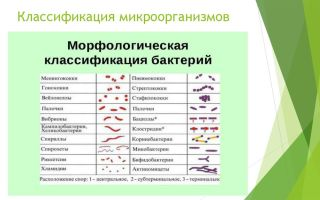 Общая характеристика бактерий как основа микробиологии