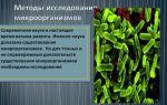Направления изучения бактерий: что интересно исследователям
