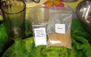 Микробиология дома: выращиваем полезные бактерии