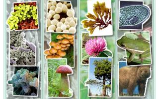 Изучаем родословную бактерий: это животные или растения?