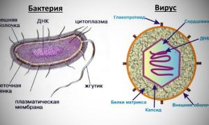 Есть ли универсальное лекарство от бактерий, вирусов и других инфекций?