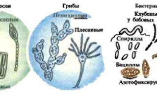Бактерии, грибы, водоросли и простейшие животные имеют много общего, что является еще одним доказательством эволюции