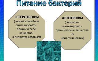 Особенности развития и питания бактерий-гетеротрофов