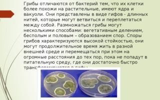 Грибы и их отличия от бактерий