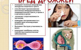 Польза или вред бактерий и дрожжей для человека