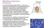 Микробиота кишечника: значение бактерий в формировании иммунитета