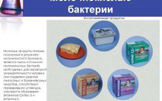 Роль бактерий в изготовлении кисломолочных продуктов