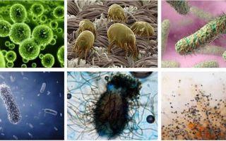 Немного о бактериях, вирусах и грибках в быту: где искать и как бороться