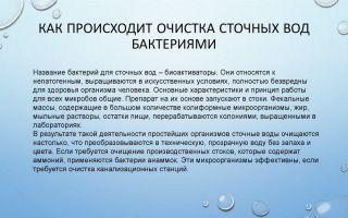 Как происходит очистка сточных вод бактериями