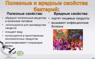Для чего нужны ферменты бактериям, их польза и вред для человека