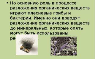 Важность роли бактерий и грибов в биоценозах земли