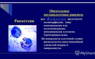 Подробно о риккетсиях – причине эпидемий