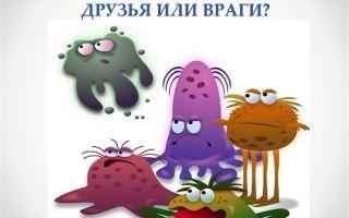 Большая польза от маленьких друзей – бактерий