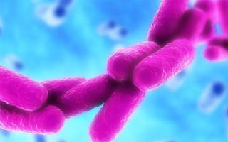 Бактерия рода клебсиелла как возможный возбудитель инфекционных заболеваний