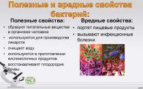 Польза и вред бактерий для человеческого организма
