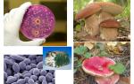 Грибы и бактерии: тонкости жизни древнейших обитателей планеты