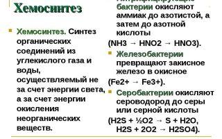 Особенности хемосинтеза бактерий