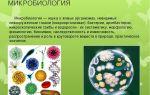 Микробиология – наука о бактериях и других микроскопических организмах