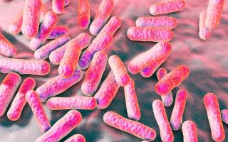 В чем состоит помощь propionibacterium для человека