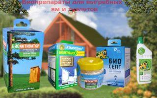 Бактерии – помощники по переработке продуктов жизнедеятельности человека в септиках и выгребных ямах