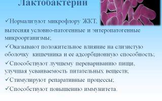 Лактобактерии – это то, что обеспечит здоровье