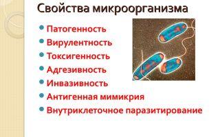 Методы как инструменты изучения бактерий их основных свойств
